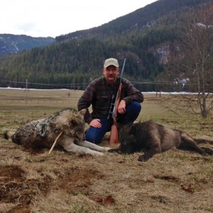 Wolves Harvested in Clark Fork, Spring 2013