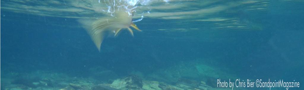 trout by Chris Bier