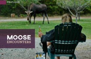 Moose in Sandpoint
